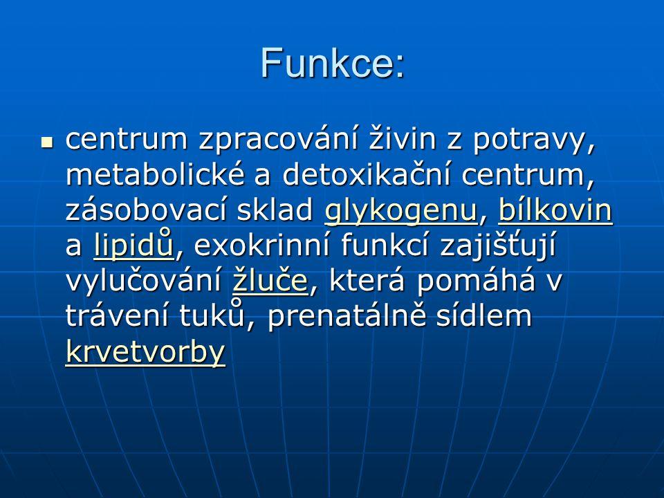 Funkce metabolismus sacharidů(glykogen) metabolismus sacharidů(glykogen) tvorba plazmatických bílkovin tvorba plazmatických bílkovin uložení vitamínů A,D,B 12 uložení vitamínů A,D,B 12 uložení Fe uložení Fe žlučové kyseliny, bilirubín žlučové kyseliny, bilirubín faktory na srážení krve faktory na srážení krve termoregulace termoregulace erytropoetin, somatomedin,angiotenzinogen udržování krevního tlaku erytropoetin, somatomedin,angiotenzinogen udržování krevního tlaku krevního tlaku krevního tlaku