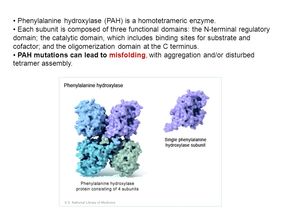 Phenylalanine hydroxylase (PAH) is a homotetrameric enzyme. Each subunit is composed of three functional domains: the N-terminal regulatory domain; th