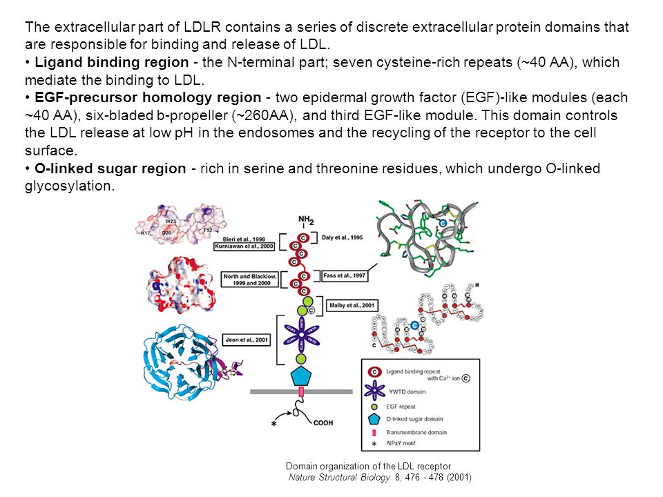 The extracellular part of LDLR contains a series of discrete extracellular protein domains that are responsible for binding and release of LDL. Ligand