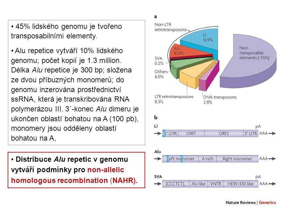45% lidského genomu je tvořeno transposabilními elementy. Alu repetice vytváří 10% lidského genomu; počet kopií je 1.3 million. Délka Alu repetice je