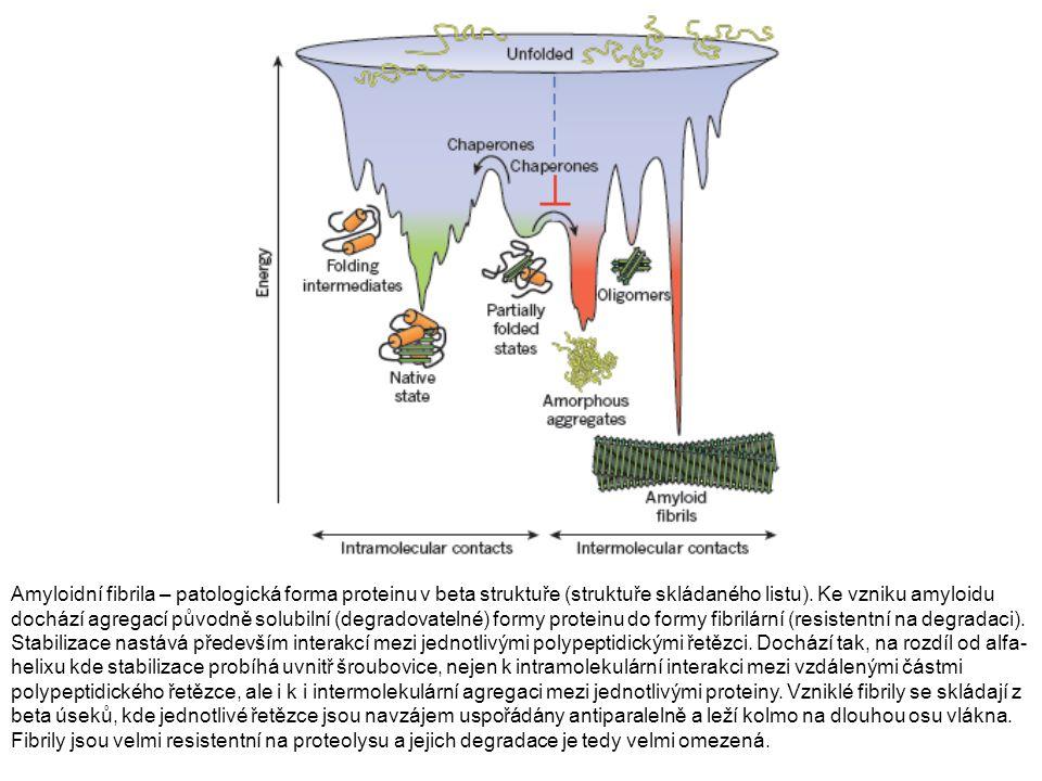 Amyloidní fibrila – patologická forma proteinu v beta struktuře (struktuře skládaného listu). Ke vzniku amyloidu dochází agregací původně solubilní (d
