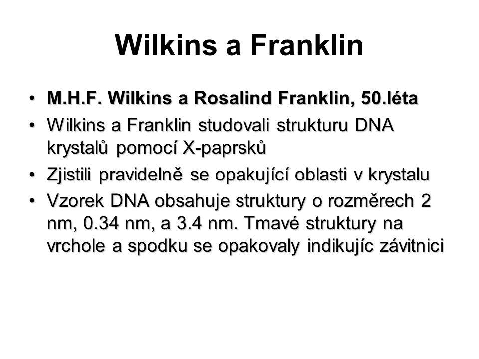 Wilkins a Franklin M.H.F. Wilkins a Rosalind Franklin, 50.létaM.H.F. Wilkins a Rosalind Franklin, 50.léta Wilkins a Franklin studovali strukturu DNA k