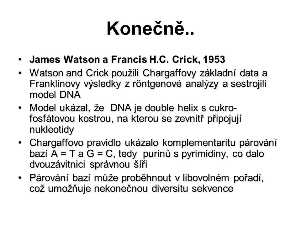 Konečně.. James Watson a Francis H.C. Crick, 1953James Watson a Francis H.C. Crick, 1953 Watson and Crick použili Chargaffovy základní data a Franklin