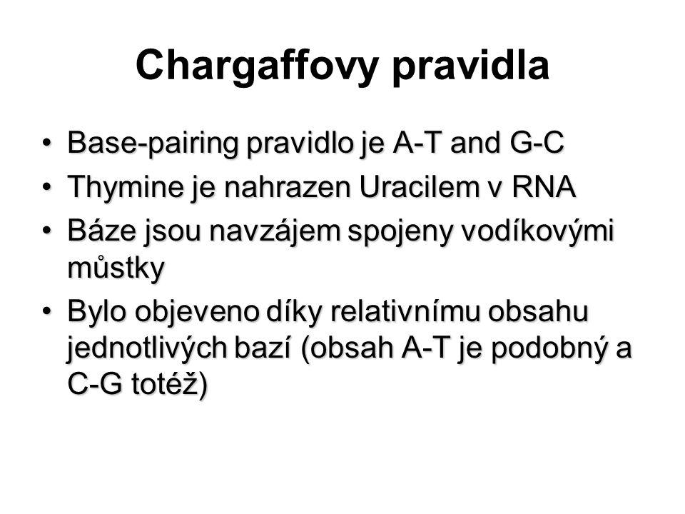 Chargaffovy pravidla Base-pairing pravidlo je A-T and G-CBase-pairing pravidlo je A-T and G-C Thymine je nahrazen Uracilem v RNAThymine je nahrazen Ur