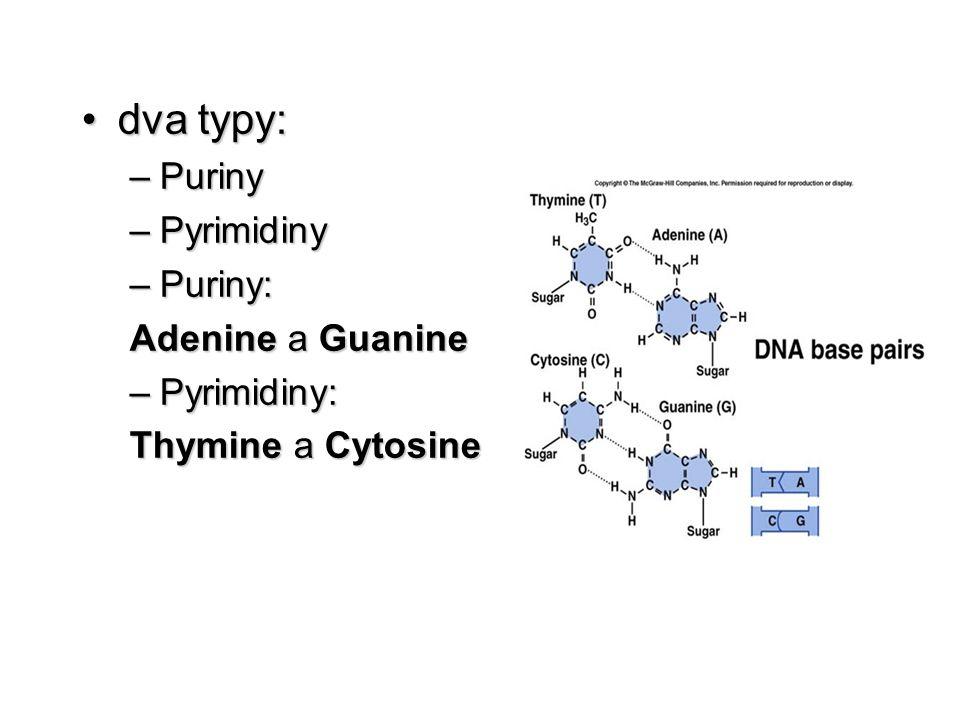 dva typy:dva typy: –Puriny –Pyrimidiny –Puriny: Adenine a Guanine –Pyrimidiny: Thymine a Cytosine