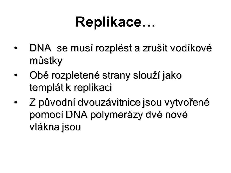 Replikace… DNA se musí rozplést a zrušit vodíkové můstkyDNA se musí rozplést a zrušit vodíkové můstky Obě rozpletené strany slouží jako templát k repl