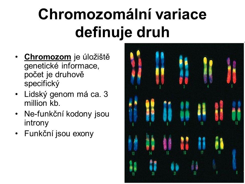 Chromozomální variace definuje druh Chromozom je úložiště genetické informace, počet je druhově specifický Lidský genom má ca. 3 million kb. Ne-funkčn