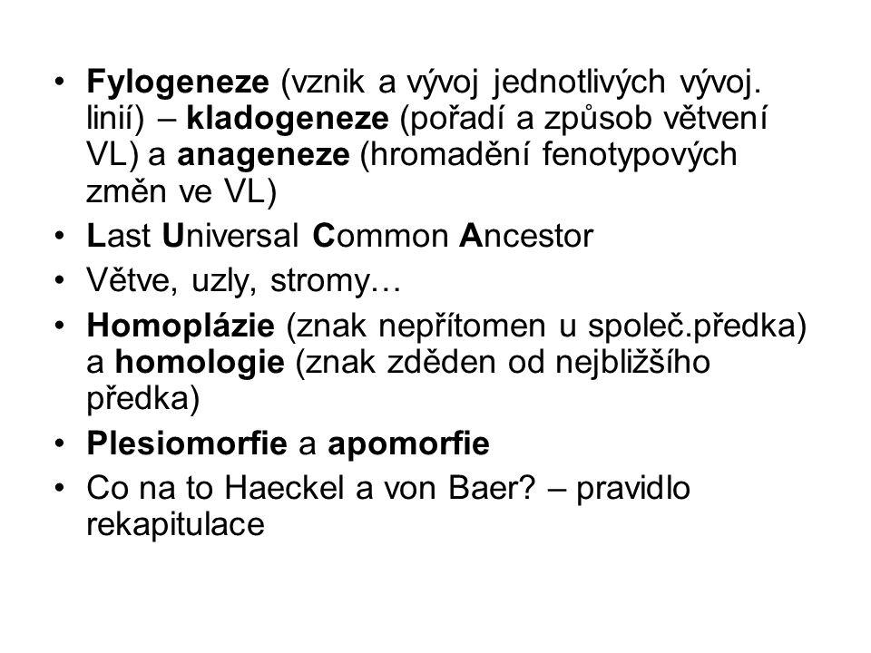 Fylogeneze (vznik a vývoj jednotlivých vývoj. linií) – kladogeneze (pořadí a způsob větvení VL) a anageneze (hromadění fenotypových změn ve VL) Last U