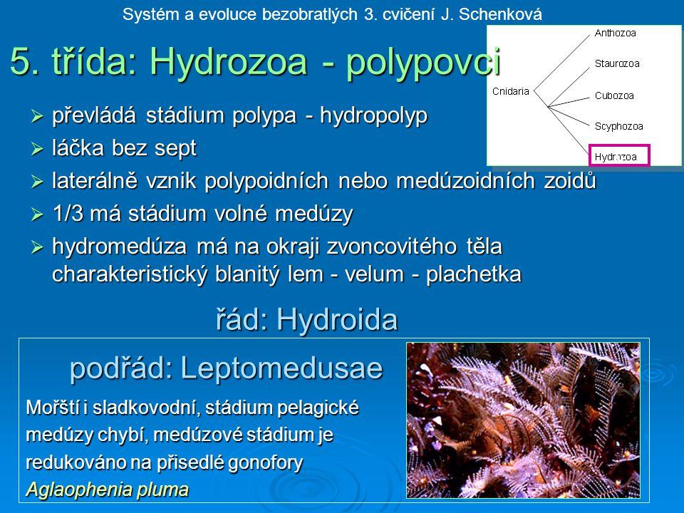  převládá stádium polypa - hydropolyp  láčka bez sept  laterálně vznik polypoidních nebo medúzoidních zoidů  1/3 má stádium volné medúzy  hydromedúza má na okraji zvoncovitého těla charakteristický blanitý lem - velum - plachetka řád: Hydroida Mořští i sladkovodní, stádium pelagické medúzy chybí, medúzové stádium je redukováno na přisedlé gonofory Aglaophenia pluma Systém a evoluce bezobratlých 3.