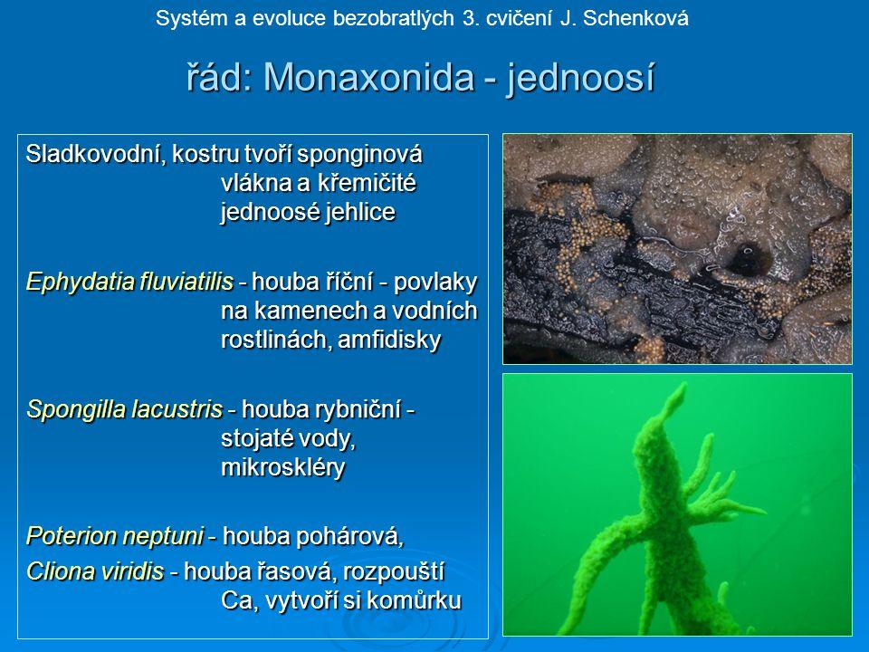 řád: Monaxonida - jednoosí Sladkovodní, kostru tvoří sponginová vlákna a křemičité jednoosé jehlice Ephydatia fluviatilis - houba říční - povlaky na kamenech a vodních rostlinách, amfidisky Spongilla lacustris - houba rybniční - stojaté vody, mikroskléry Poterion neptuni - houba pohárová, Cliona viridis - houba řasová, rozpouští Ca, vytvoří si komůrku Systém a evoluce bezobratlých 3.