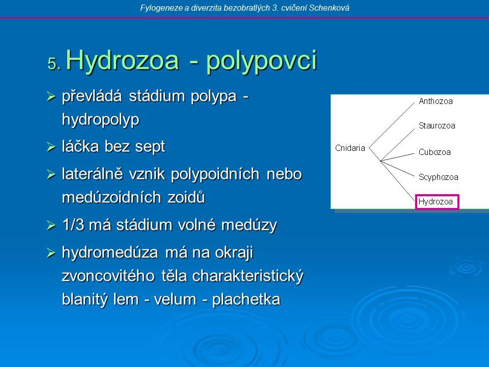  převládá stádium polypa - hydropolyp  láčka bez sept  laterálně vznik polypoidních nebo medúzoidních zoidů  1/3 má stádium volné medúzy  hydromedúza má na okraji zvoncovitého těla charakteristický blanitý lem - velum - plachetka 5.