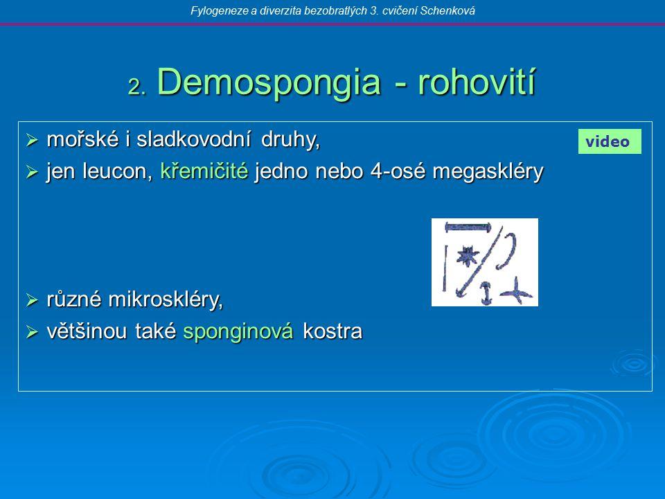 2. Demospongia - rohovití  mořské i sladkovodní druhy,  jen leucon, křemičité jedno nebo 4-osé megaskléry  různé mikroskléry,  většinou také spong