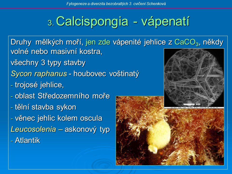 Siphonophora - trubýši Mořští koloniální, plavou na hladině, vznášejí se, polypoidní a medúzoidní polypi na kolmém stvolu, společné orgány, bez medúzy  pneumatofory  daktylozoidi  gastrozoidi  gonozoidi  nektofory Physalia physalis - měchýřovka portugalská – pneumatofor modrý, několik m dlouhá chapadla Physophora hydrostatica - měchýřovka vznášivá – červené kolonie video Fylogeneze a diverzita bezobratlých 3.