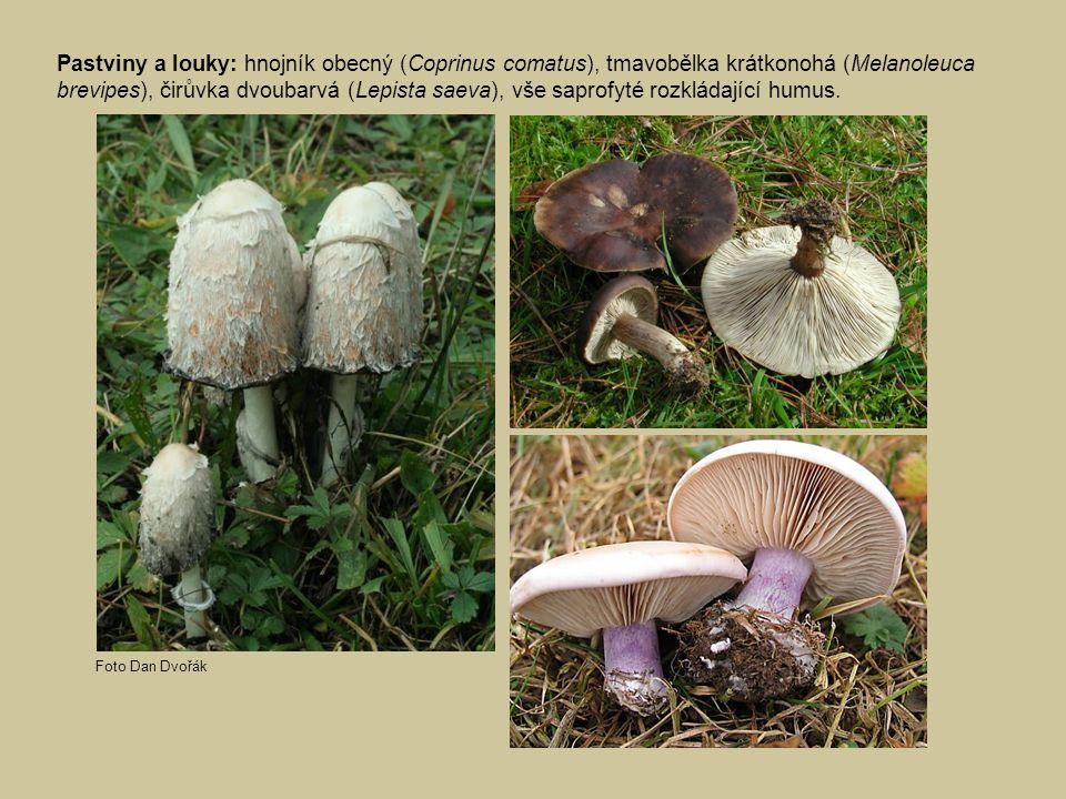 Pastviny a louky: hnojník obecný (Coprinus comatus), tmavobělka krátkonohá (Melanoleuca brevipes), čirůvka dvoubarvá (Lepista saeva), vše saprofyté ro