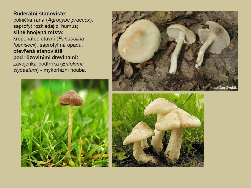 Ruderální stanoviště: polnička raná (Agrocybe praecox), saprofyt rozkládající humus; silně hnojená místa: kropenatec otavní (Panaeolina foenisecii), s