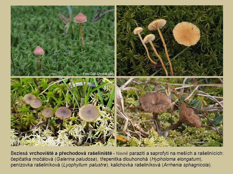 Bezlesá vrchoviště a přechodová rašeliniště - hlavně paraziti a saprofyti na meších a rašelinících: čepičatka močálová (Galerina paludosa), třepenitka