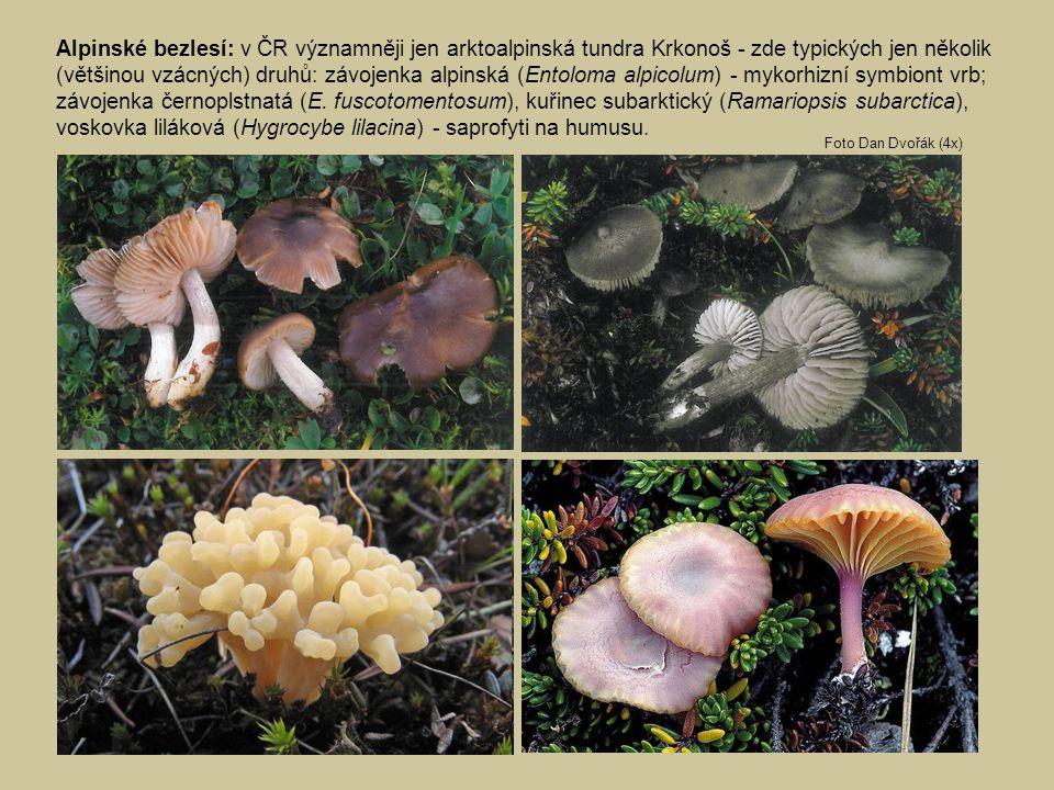 Alpinské bezlesí: v ČR významněji jen arktoalpinská tundra Krkonoš - zde typických jen několik (většinou vzácných) druhů: závojenka alpinská (Entoloma