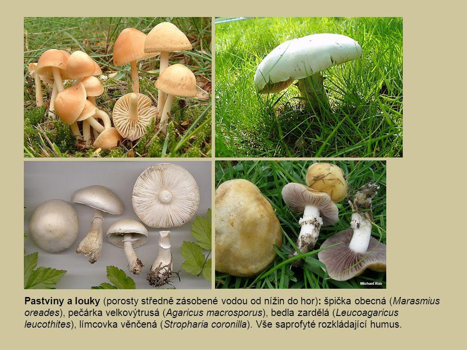 Pastviny a louky: hnojník obecný (Coprinus comatus), tmavobělka krátkonohá (Melanoleuca brevipes), čirůvka dvoubarvá (Lepista saeva), vše saprofyté rozkládající humus.