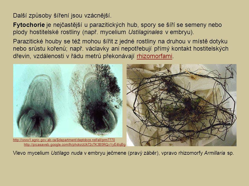 Další způsoby šíření jsou vzácnější. Fytochorie je nejčastější u parazitických hub, spory se šíří se semeny nebo plody hostitelské rostliny (např. myc