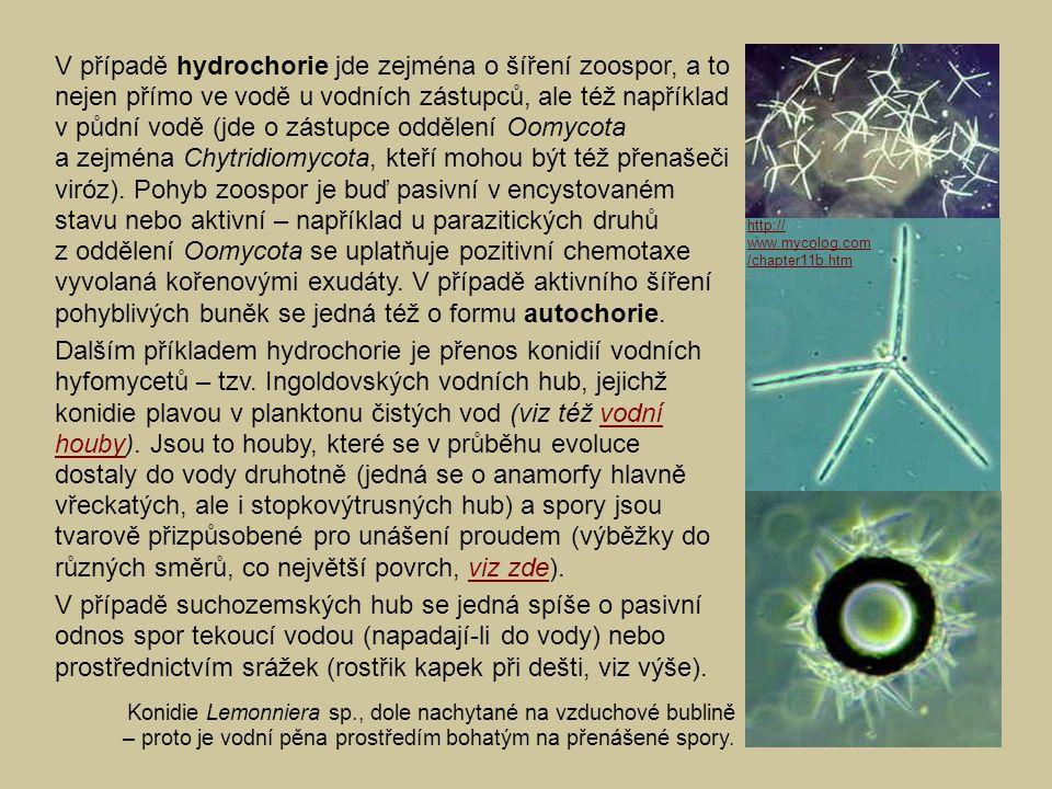 V případě hydrochorie jde zejména o šíření zoospor, a to nejen přímo ve vodě u vodních zástupců, ale též například v půdní vodě (jde o zástupce odděle