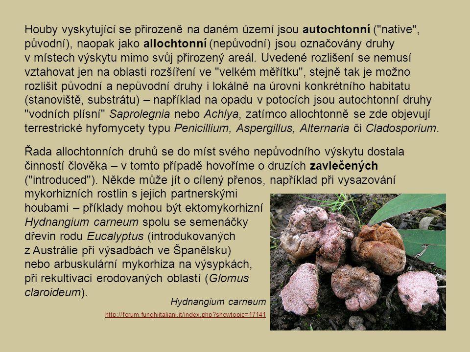 Houby vyskytující se přirozeně na daném území jsou autochtonní (