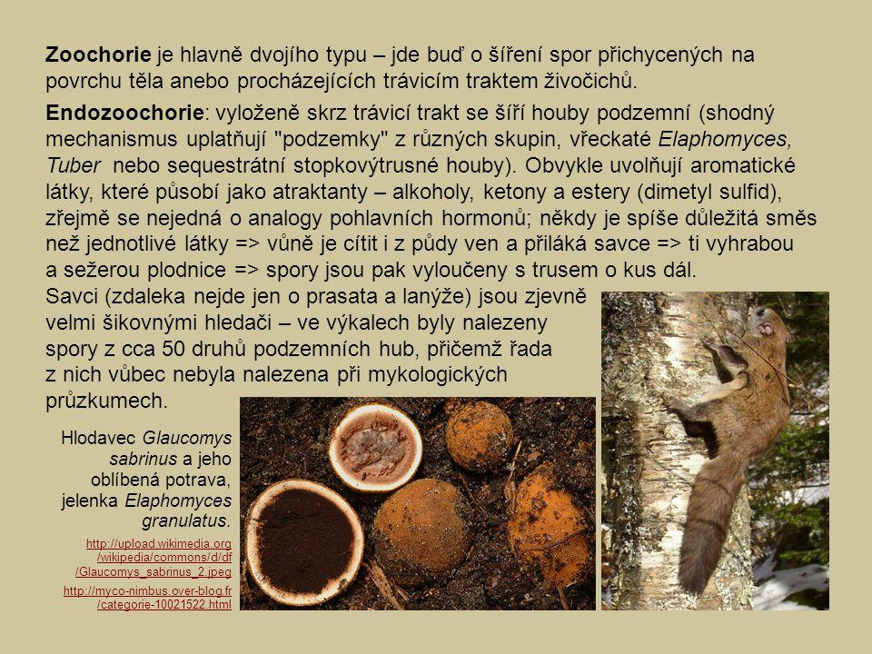 Zoochorie je hlavně dvojího typu – jde buď o šíření spor přichycených na povrchu těla anebo procházejících trávicím traktem živočichů. Endozoochorie: