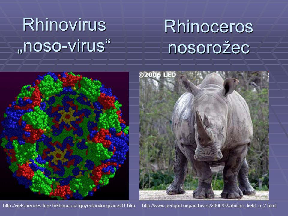 "Rhinovirus ""noso-virus http://vietsciences.free.fr/khaocuu/nguyenlandung/virus01.htm Rhinoceros nosorožec http://www.perlgurl.org/archives/2006/02/african_field_n_2.html"