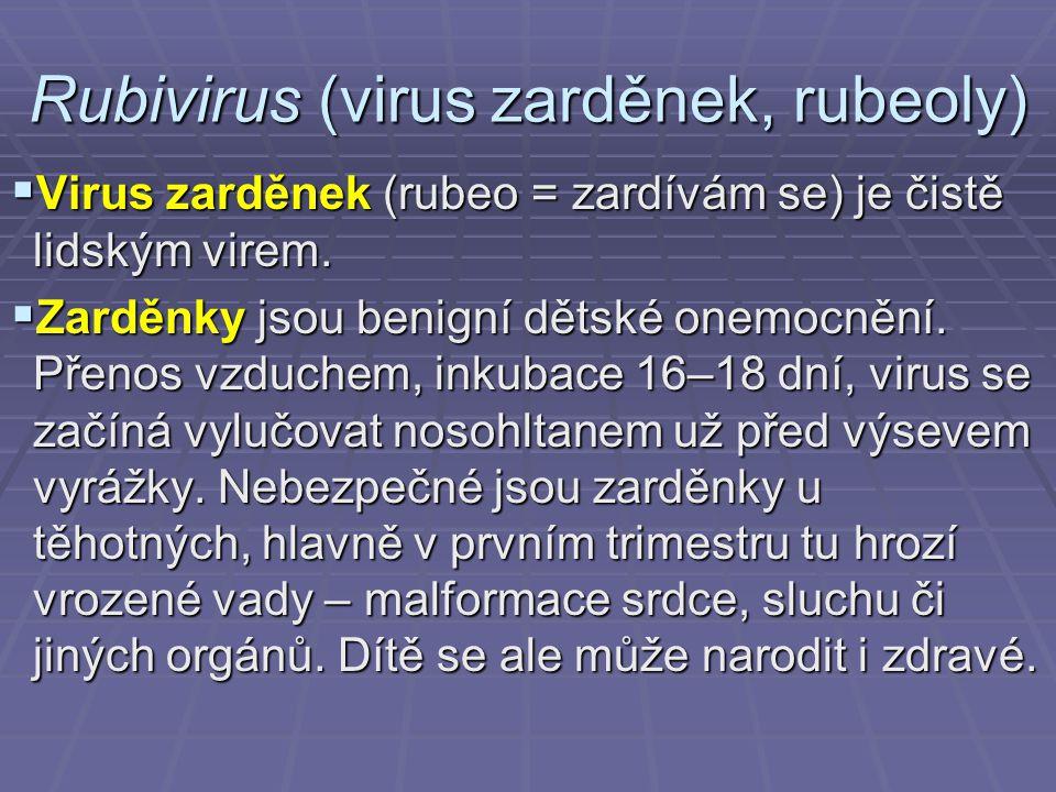 Rubivirus (virus zarděnek, rubeoly)  Virus zarděnek (rubeo = zardívám se) je čistě lidským virem.