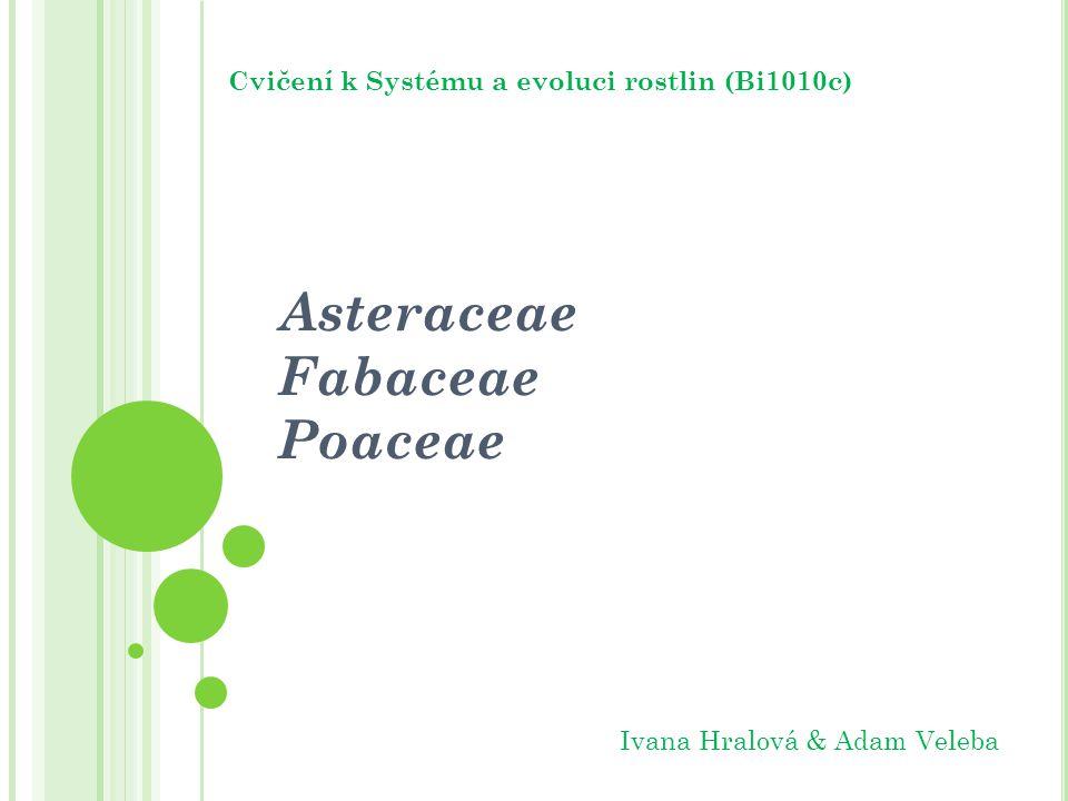 Asteraceae Fabaceae Poaceae Cvičení k Systému a evoluci rostlin (Bi1010c) Ivana Hralová & Adam Veleba