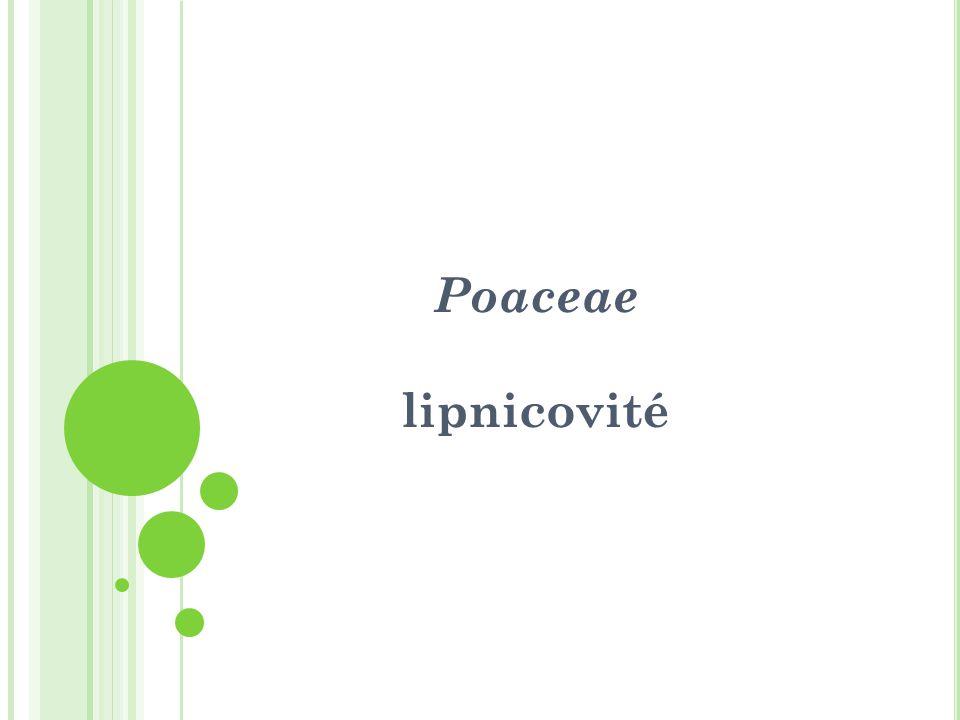 Poaceae lipnicovité