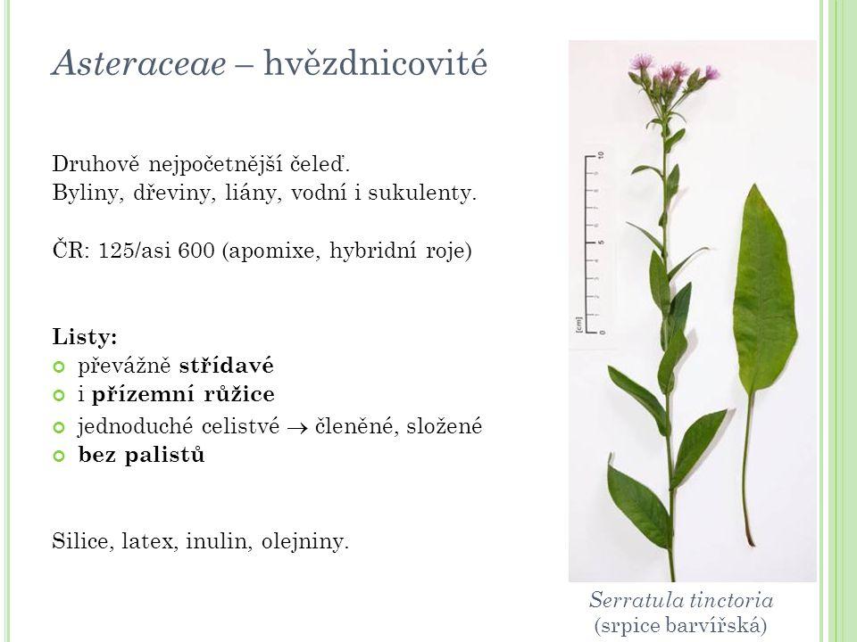 Asteraceae – hvězdnicovité Druhově nejpočetnější čeleď. Byliny, dřeviny, liány, vodní i sukulenty. ČR: 125/asi 600 (apomixe, hybridní roje) Listy: pře