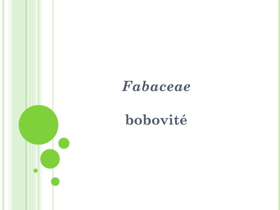 Fabaceae - bobovité Byliny a dřeviny, nejvíce v tropech.