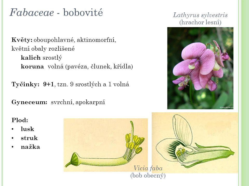 Květy: oboupohlavné, aktinomorfní, květní obaly rozlišené kalich srostlý koruna volná (pavéza, člunek, křídla) Tyčinky: 9+1, tzn. 9 srostlých a 1 voln