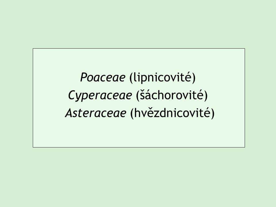 Poaceae (lipnicovité) Cyperaceae (šáchorovité) Asteraceae (hvězdnicovité)