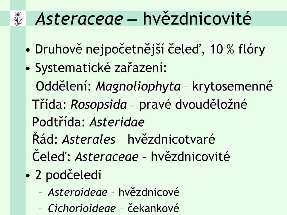 Druhově nejpočetnější čeleď, 10 % flóry Systematické zařazení: Oddělení: Magnoliophyta – krytosemenné Třída: Rosopsida – pravé dvouděložné Podtřída: Asteridae Řád: Asterales – hvězdnicotvaré Čeleď: Asteraceae – hvězdnicovité 2 podčeledi –Asteroideae – hvězdnicové –Cichorioideae – čekankové Asteraceae – hvězdnicovité