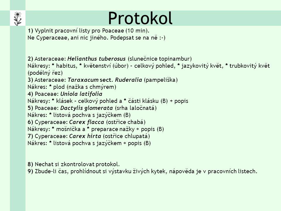 Protokol 1) Vyplnit pracovní listy pro Poaceae (10 min).