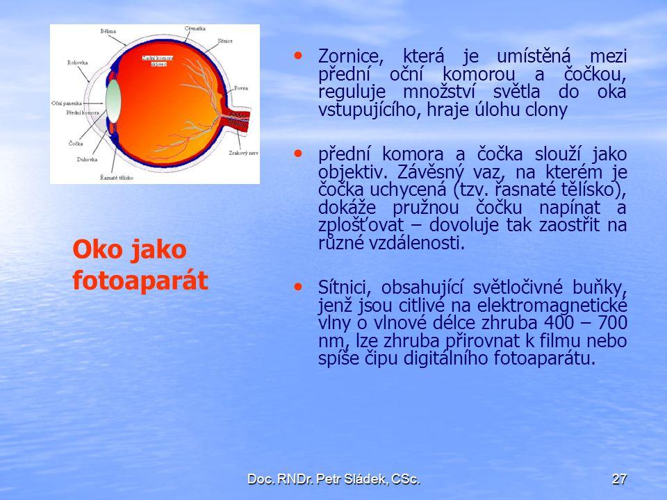 Doc. RNDr. Petr Sládek, CSc.27 Zornice, která je umístěná mezi přední oční komorou a čočkou, reguluje množství světla do oka vstupujícího, hraje úlohu