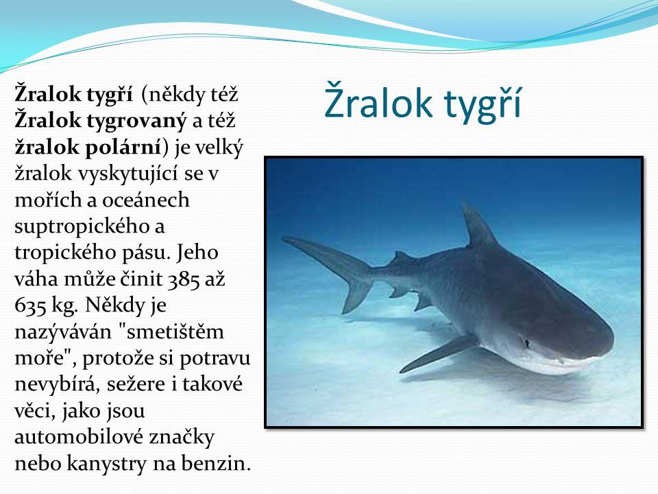 Žralok tygří Žralok tygří (někdy též Žralok tygrovaný a též žralok polární) je velký žralok vyskytující se v mořích a oceánech suptropického a tropick