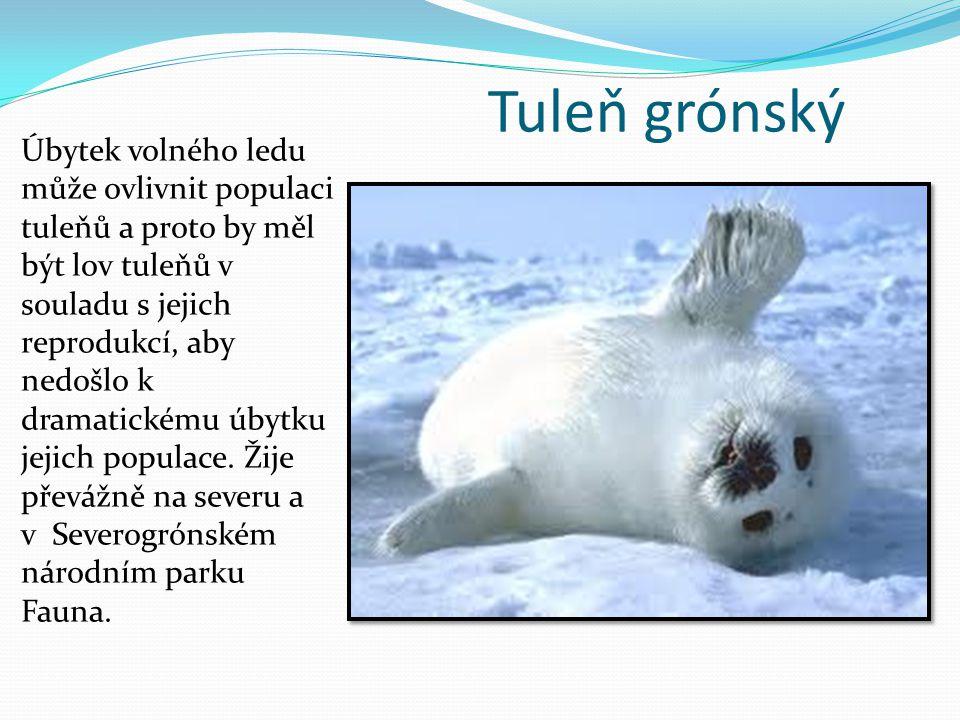 Tuleň grónský Úbytek volného ledu může ovlivnit populaci tuleňů a proto by měl být lov tuleňů v souladu s jejich reprodukcí, aby nedošlo k dramatickém