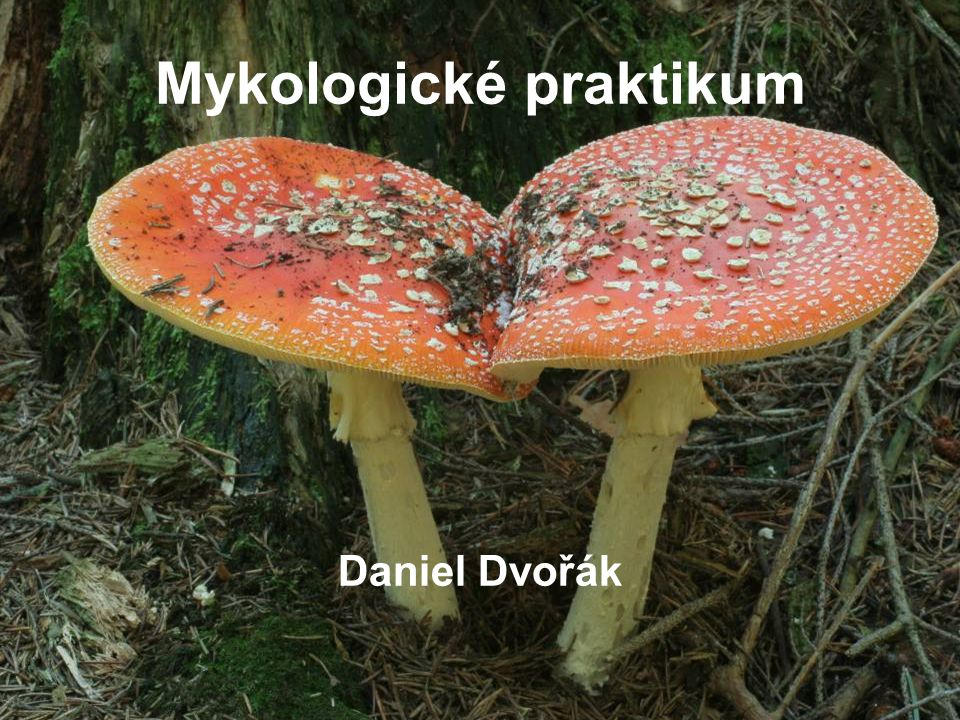 Mykologické praktikum Daniel Dvořák