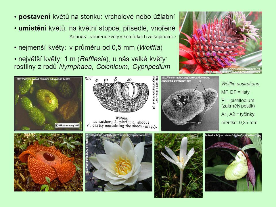doba trvání květu: Nymphaea amazonica 20 minut, pupalky (Oenothera) 1 noc – naproti tomu tropické orchideje i několik měsíců, nejsou-li opyleny symetrie květů: primárně asymetrické (Winteraceae), aktinomorfní (více rovin souměrnosti; např.
