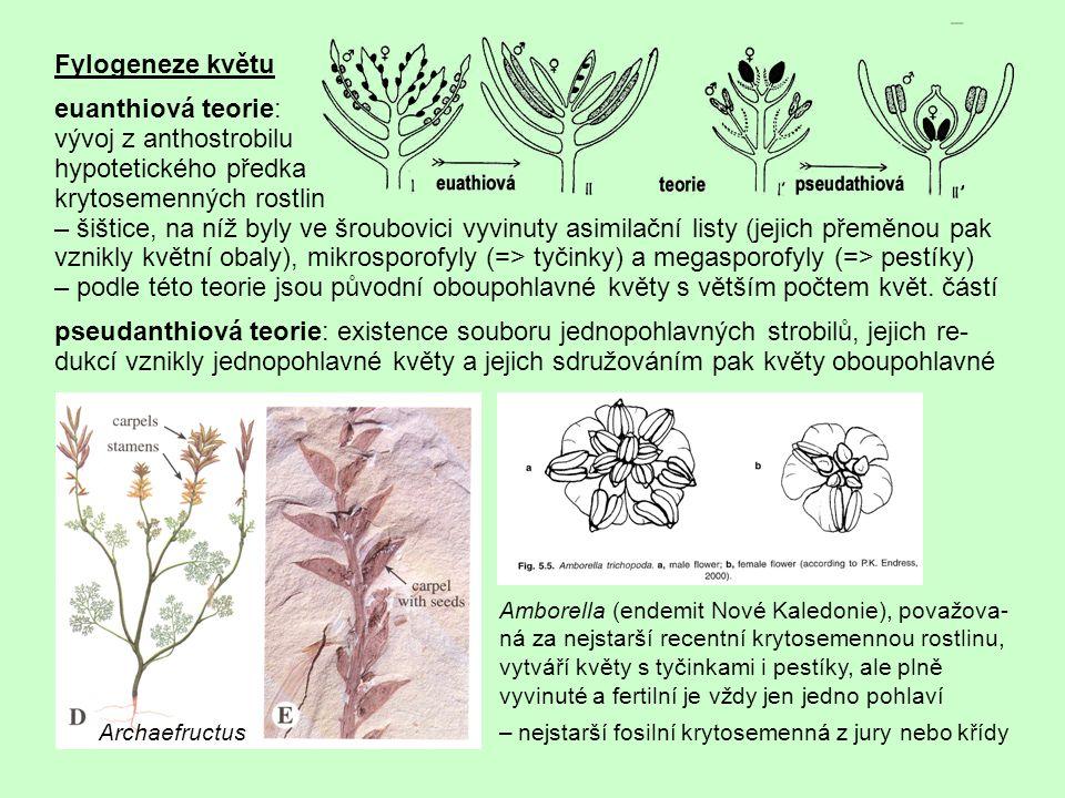 Pohlavnost květů dnes přijímána euanthiová teorie, květy původně oboupohlavné = monoklinické => odvozený typ: květy jednopohlavné = diklinické – pestíkové nebo prašníkové http://botanika.wendys.cz/slovnik/heslo.php?731http://botanika.wendys.cz/slovnik/heslo.php?735 Rostliny jednodomé = monoecické mají samčí i samičí květy na jednom jedinci (Quercus, Zea), dvojdomé = dioecické jsou samčí a samičí jedinci (např.