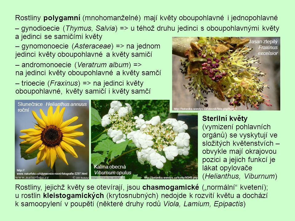Uspořádání květních orgánů – primitivní acyklické = spirální květy mají všechny květní orgány ve šroubovici (Magnoliaceae, Calycanthaceae) – přechodný typ – květy spirocyklické mají část květních orgánů ve spirále (obvykle mnohočetné tyčinky a pestíky) a část v kruzích (květní obaly; zástupci např.