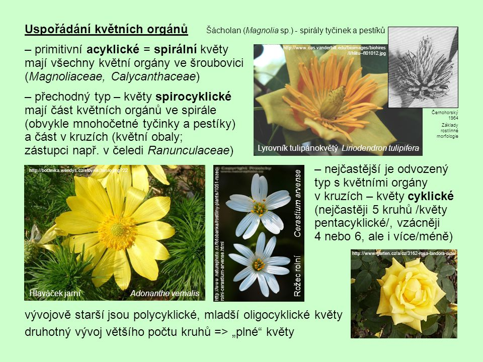 proces oligomerizace = vývojový přechod od nestálého velkého počtu částí na menší a stálý jednoděložné rostliny mají typicky květy trimerické (složky květu uspořádány v kruzích po 3, resp.
