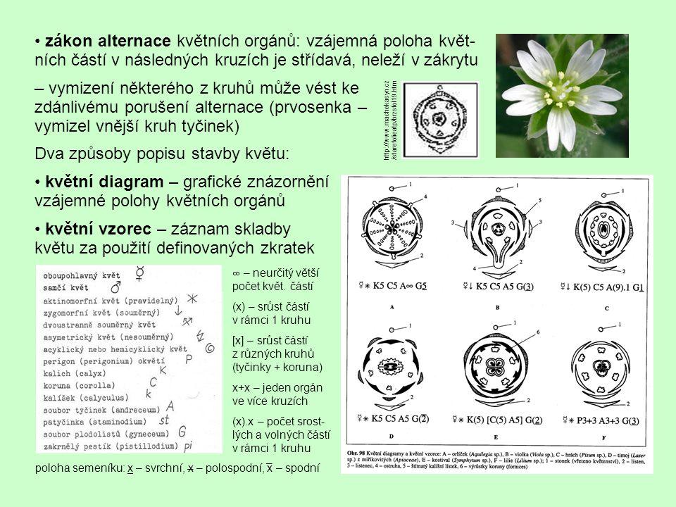 Ontogeneze květu exogenní základ (tunika), vývoj obvykle centripetální u acyklických postupný vývoj květu, u cyklických se kruhy formují naráz k diferenciaci tyčinek na nitky a prašníky dojde posléze, nitka má i interkalární růst
