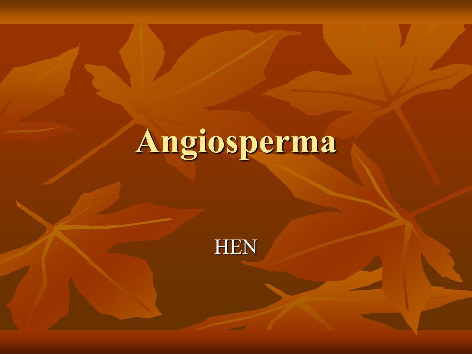 Životní cyklus angiosperm - přehled