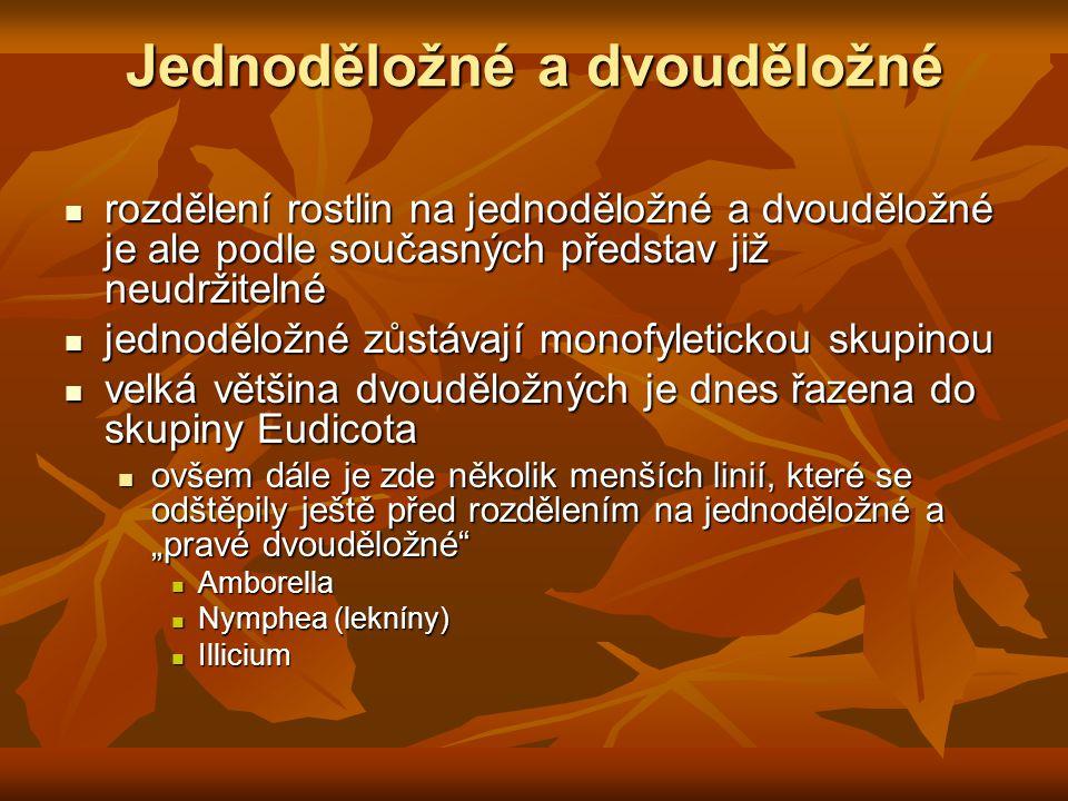 """Jednoděložné a dvouděložné rozdělení rostlin na jednoděložné a dvouděložné je ale podle současných představ již neudržitelné rozdělení rostlin na jednoděložné a dvouděložné je ale podle současných představ již neudržitelné jednoděložné zůstávají monofyletickou skupinou jednoděložné zůstávají monofyletickou skupinou velká většina dvouděložných je dnes řazena do skupiny Eudicota velká většina dvouděložných je dnes řazena do skupiny Eudicota ovšem dále je zde několik menších linií, které se odštěpily ještě před rozdělením na jednoděložné a """"pravé dvouděložné ovšem dále je zde několik menších linií, které se odštěpily ještě před rozdělením na jednoděložné a """"pravé dvouděložné Amborella Amborella Nymphea (lekníny) Nymphea (lekníny) Illicium Illicium"""