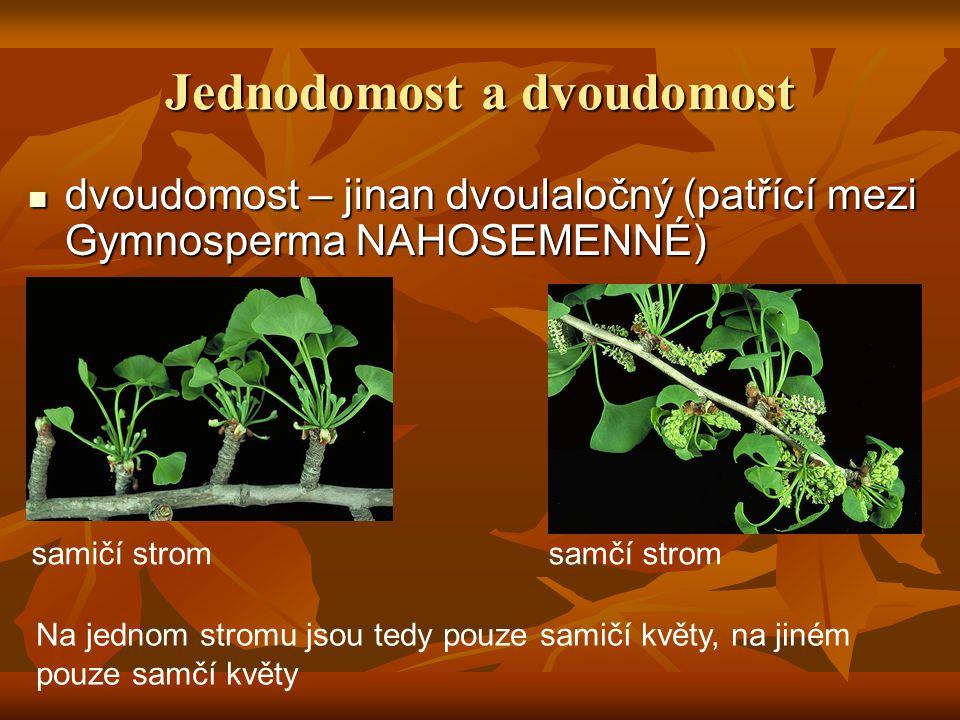 Jednodomost a dvoudomost dvoudomost – jinan dvoulaločný (patřící mezi Gymnosperma NAHOSEMENNÉ) dvoudomost – jinan dvoulaločný (patřící mezi Gymnosperma NAHOSEMENNÉ) Na jednom stromu jsou tedy pouze samičí květy, na jiném pouze samčí květy samičí strom samčí strom