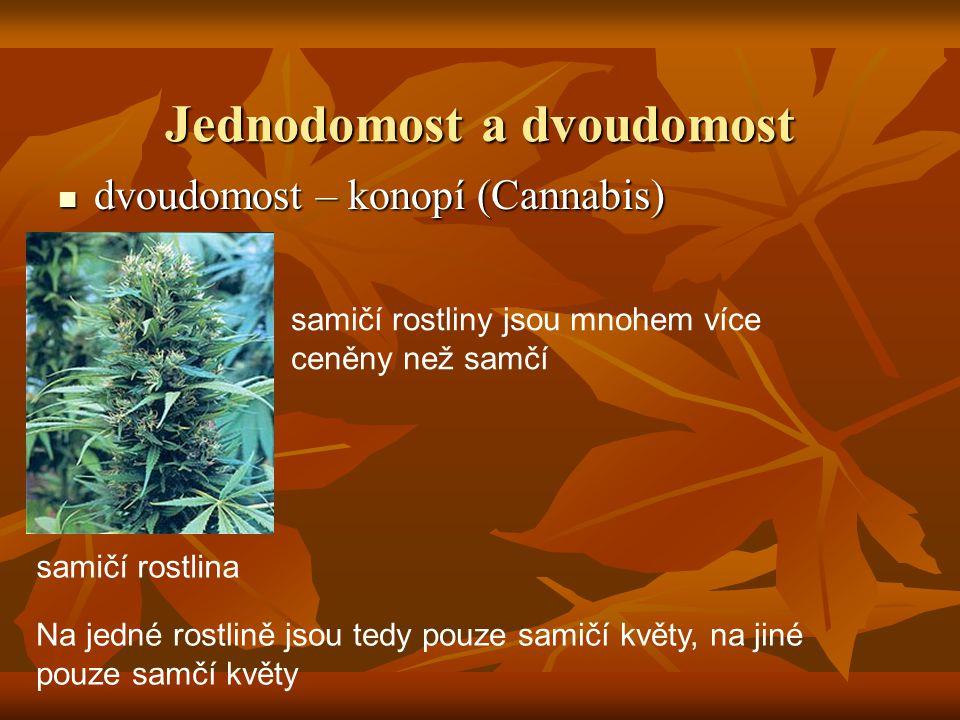 Jednodomost a dvoudomost dvoudomost – konopí (Cannabis) dvoudomost – konopí (Cannabis) Na jedné rostlině jsou tedy pouze samičí květy, na jiné pouze samčí květy samičí rostlina samičí rostliny jsou mnohem více ceněny než samčí