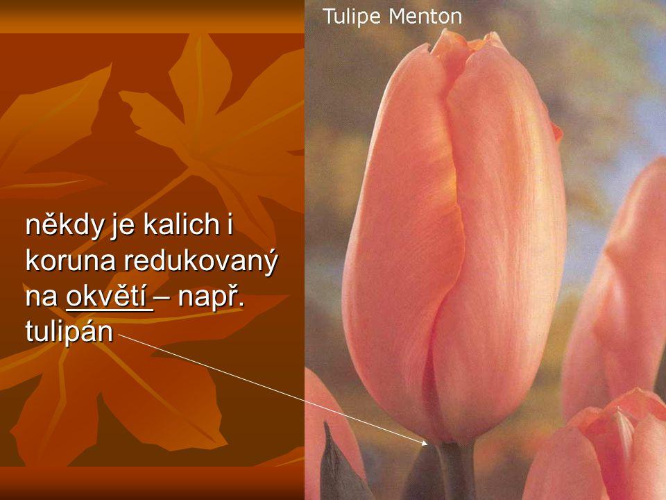 někdy je kalich i koruna redukovaný na okvětí – např. tulipán